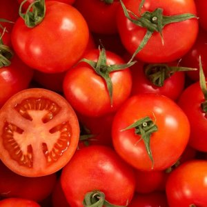 Tomato Exports Earned $9.5m in 1 Month