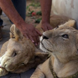 It could be safely estimated that nearly 35,900 animals are smuggled into Iran every year.