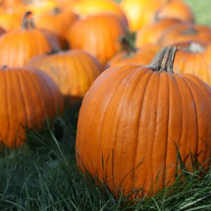 31K Tons of Zucchini, Pumpkins Exported