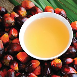 Rise in Palm  Oil Imports