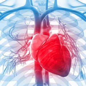 Int'l Cardiovascular Congress