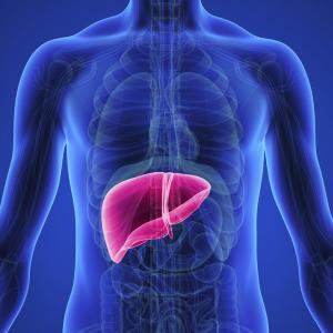 High-Fat Diet  Ups Fatty  Liver Disease