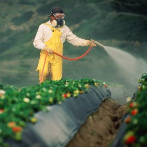 Of 5,000 brands of chemical fertilizers tested by the SWRI, 4,200 brands were approved.