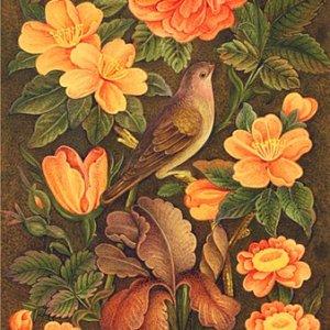 Rose & Nightingale