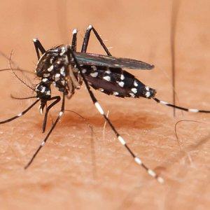 India Reports Zika Virus