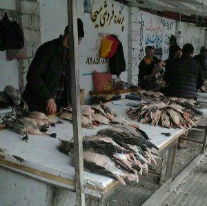 Last Warning to Fereydunkenar Poachers