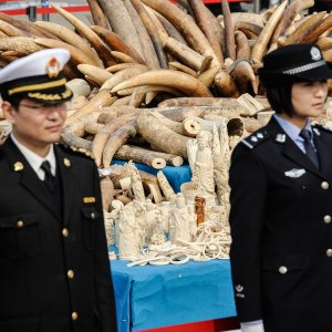 No More Ivory Trade in China