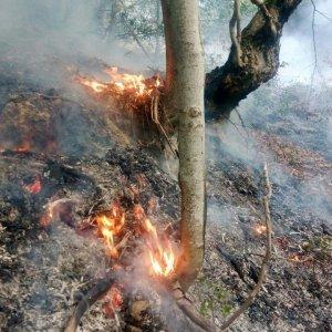 N. Khorasan Fire Extinguished