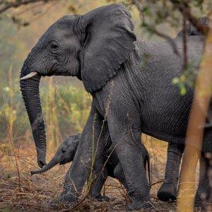 Kenyan Rangers Turn Detectives to Protect Elephants
