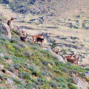 Poachers Arrested in Tehran