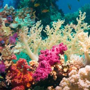 Southern Corals Under Threat