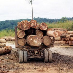 Deforestation-Economic Growth Link Confirmed
