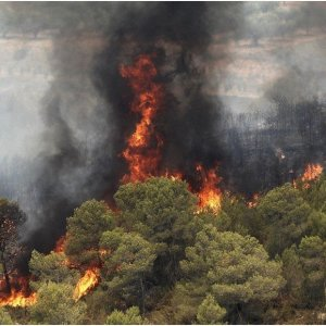 Wildfires Increase by 20%