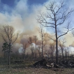Wildfires inflict upward of 3.2 trillion rials ($85.3 million) in losses every year.