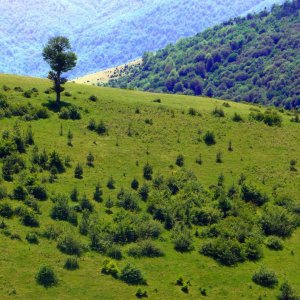 Thanks to high rainfall, Gilan is one of Iran's greenest provinces,