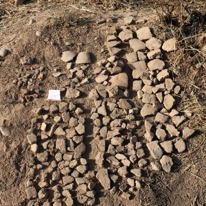 Shiraz More Ancient Than Previously Thought