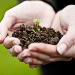 Some 16 million tons of soil are subject to erosion yearly.