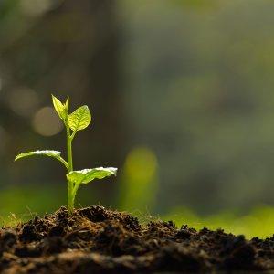 World Underscores  Soil Conservation