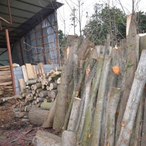 2 Tons of Illegally-Logged Timber Seized