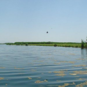 There are 42 types of wetlands in the world, 41 of which are found in Iran.