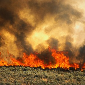 Forest Fires Declining