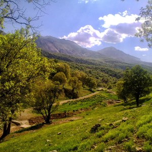Zagros Plants Facing Extinction