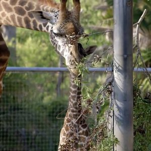 Only five zoos out of 70 in operation have yet to receive permits.