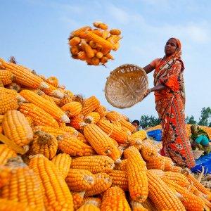 Bangla Food Security in Danger