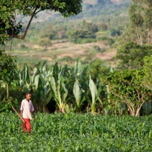 Ethiopia Growth Estimated at 7.3%