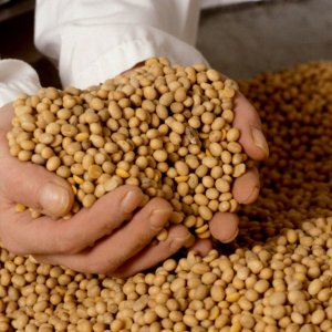 President Mauricio Macri earlier ruled out a policy laid out in the IMF document—maintaining taxes on soybean exports.