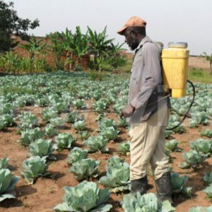 The country depends heavily on agriculture, relying on rainwater.