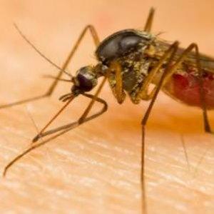 Venezuela Malaria Cases Jump by 69%