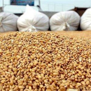 Corn, Rice Top List of Iran Imports