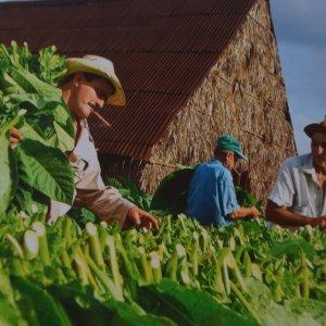 Unjust US Trade Embargo Cost Cuba $130 Billion