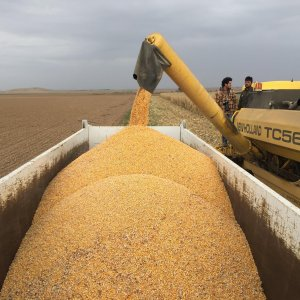 Iran to Buy Wheat for Flour Exports