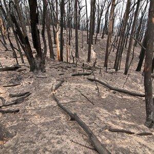 Two Dead, Towns Destroyed in Australia Bushfire