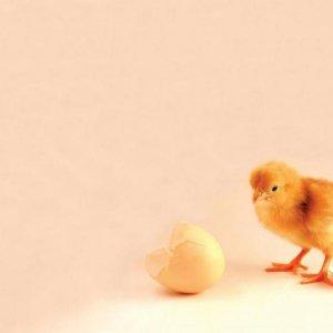 Housing Market's  Chicken-and-Egg  Dilemma