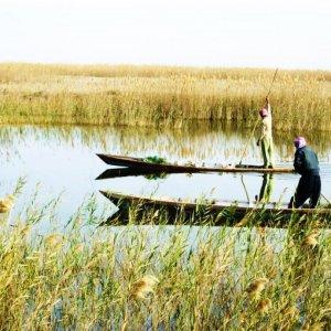 Wetland Preservation Plan Sent to Majlis