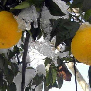 Mazandaran Frost-Stricken Farmers to Get Loans