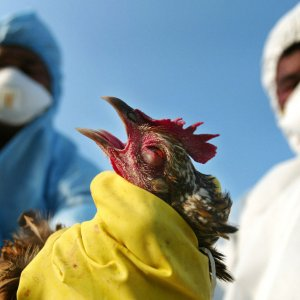 Funds to Fight Avian Flu