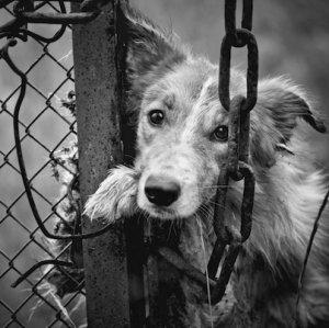 Man Imprisoned for 2 Months Over Animal Abuse