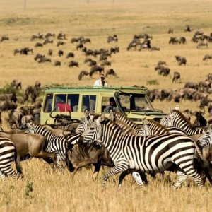 UNWTO: Tourism Can Help Preserve Biodiversity