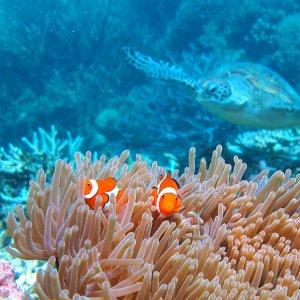 Largest Coral Die-Off in Barrier Reef