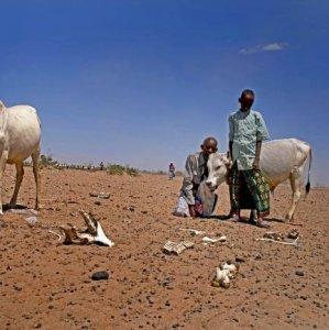 Ethiopia Registers  8% Growth