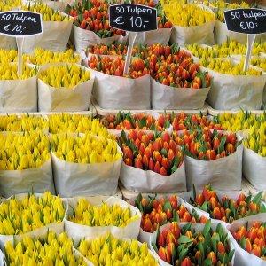 Dutch Economy Back to Pre-Crisis Levels