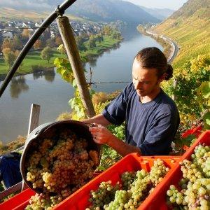 Slovak Economy Slows in 3Q