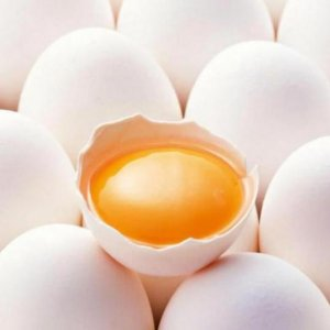 Investment Opportunities in Powdered Egg Production