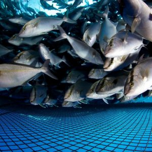 Aquaculture Deal With Norway's AKVA Group, Aqualine