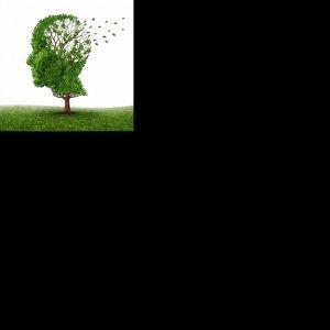 Dragonhead to Treat Alzheimer's