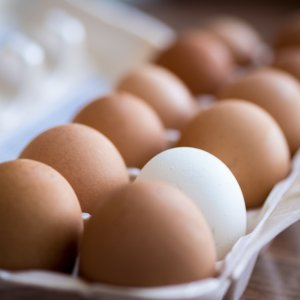 Egg Exports Halved